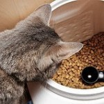 Cat and Dog Food Recalled