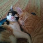 Brady Kitten & SISI!