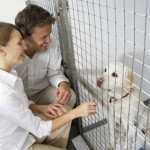 Prevent Common Health Issues in Your New Dog