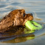 When Your Dog Goes Swimming, Keep an Eye Out!