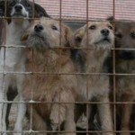 Stiffer penalties for animal neglect and ill-treatment
