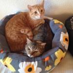 Kieble & Honey – Special Cats