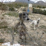 El Galgo Senior Needs Funds