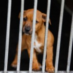 Stop Horrifying Experiments on Puppies and Kittens