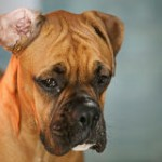 Demand Justice for Dog Left To Starve to Death