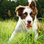Save 10,000 Dogs from Slaughter