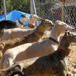 £25.00 Feeds A Rescue Galgo At 112 Carlota Galgos For One Month