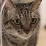 High-tech cat feeder uses facial recognition to save all nine lives