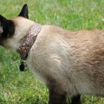 Smart collar turns your cat into a WiFi hacking weapon
