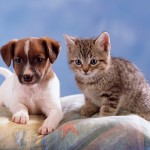 More than half of cat and dog owners lose sleep because their animals wake them up early