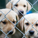 150,000 Pets Abandoned Each Year In Spain