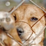 Save 10,000 Puppies: End Yulin's Dog-Eating Festival!