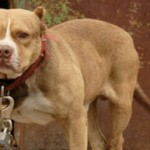 Tell the UK Government to Prioritise Policing of Dog Fighting!