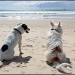30% Spaniards Plan To Take Their Pets On Holiday
