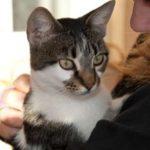 Mira Cat's New Photos