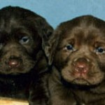 Crack Down on Internet Pet Sales in the UK