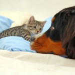 A Happy Home: Living With Cats And Dogs