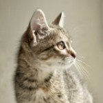 Save Cats From Being Poisoned by Anti-Freeze