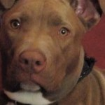 Bring our beloved dog Marley home, and end unfair breed legislation!