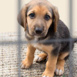 Stop the cruel practice of  smuggling puppies into the UK