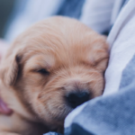 Gifting a Pet This Christmas? Discover Why This May Not Be the Best Idea