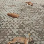 Some Depraved Individual Sliced the Throats of Seven Puppies for Barking