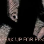 Lincolnshire Pig Farm Petition